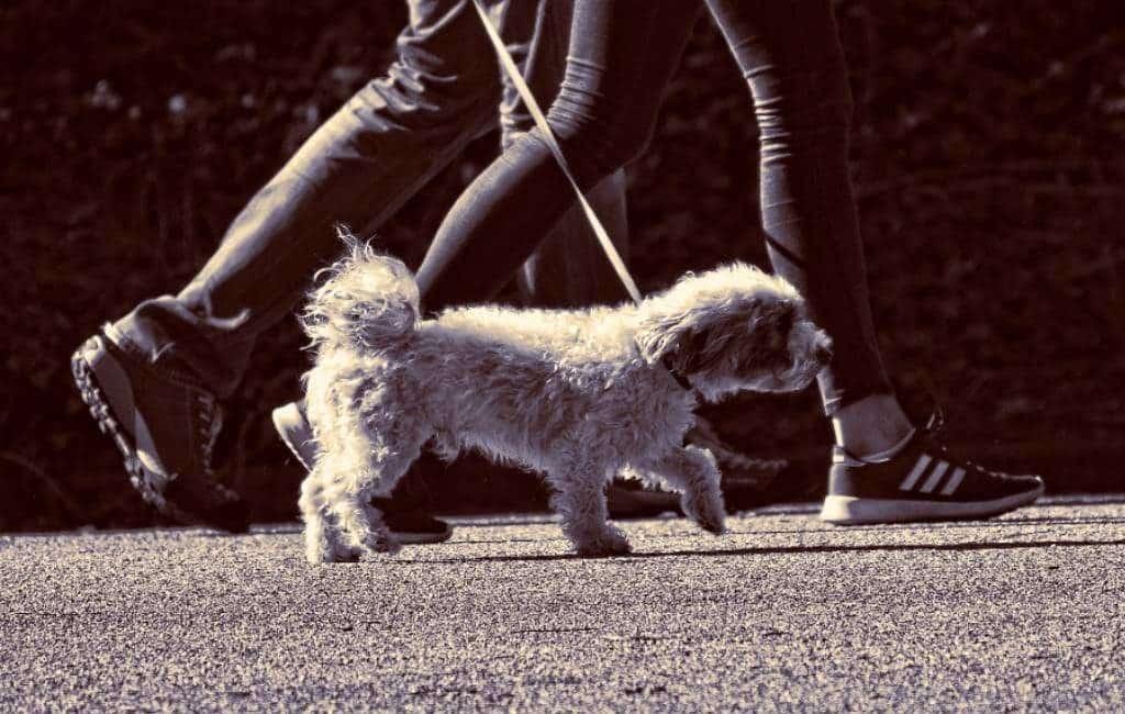 Honden te huur om thuisquarantaine te omzeilen in Spanje