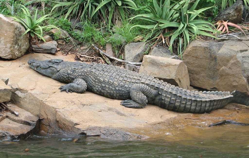 Politie zoekt naar een krokodil in Valladolid