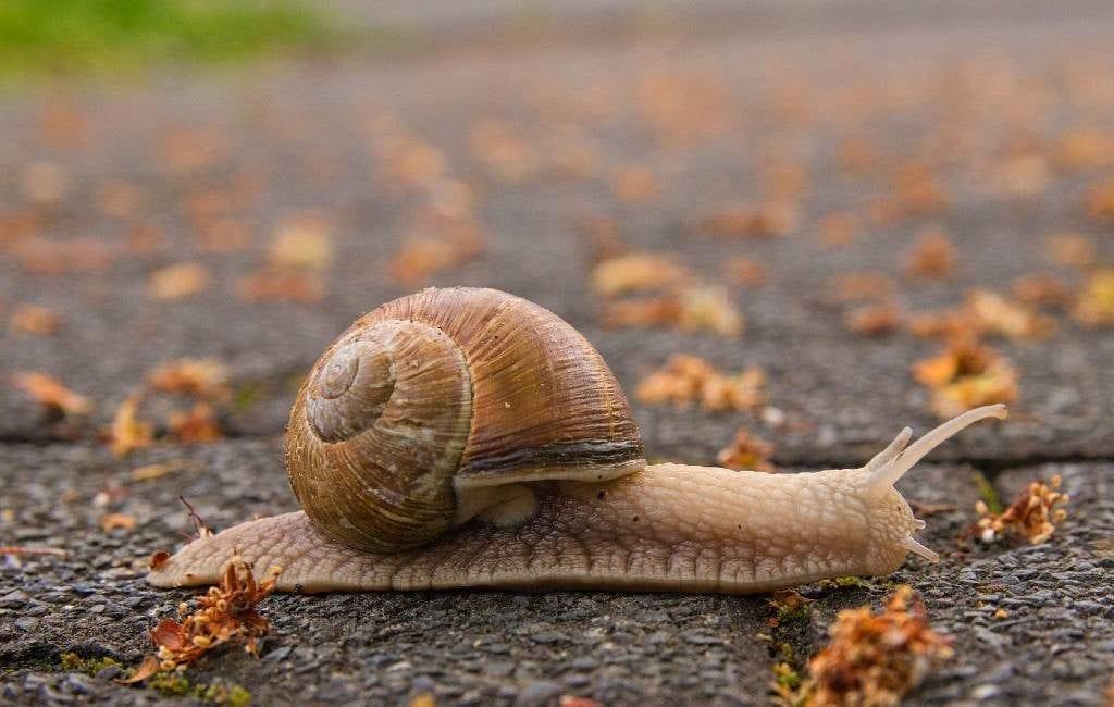 SpanjeVerhaal: Overstekende caracoles!