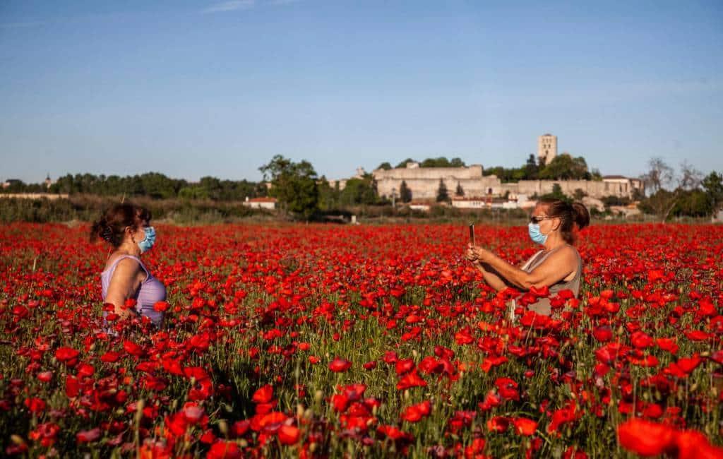 Het beroemdste klaprozenveld van Spanje in Zamora