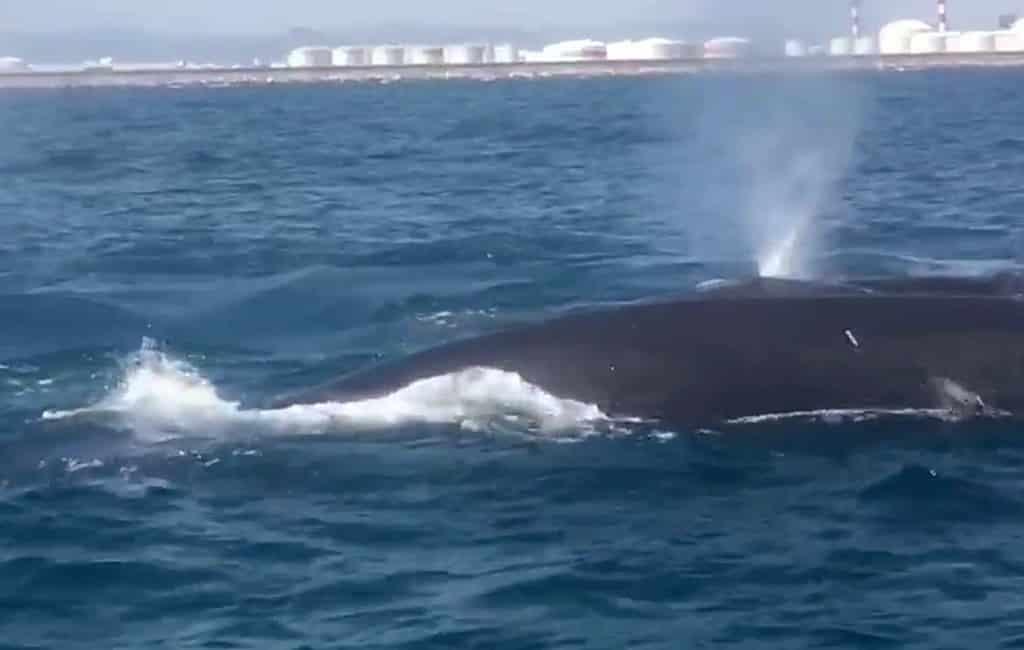 Geen maritiem verkeer haven Barcelona vanwege walvissen