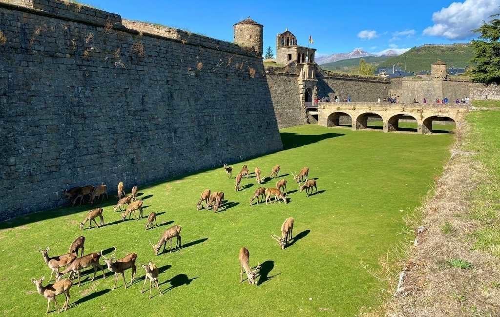 De herten van de citadel in Jaca als toeristische attractie