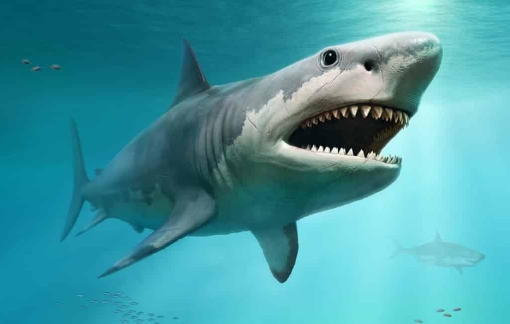 De Megalodon-haai broedde 23 miljoen jaar geleden bij Tarragona