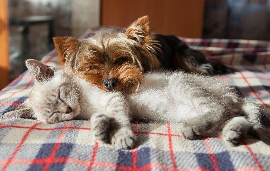 Madrid heeft meer geregistreerde honden en katten dan kinderen jonger dan 10 jaar
