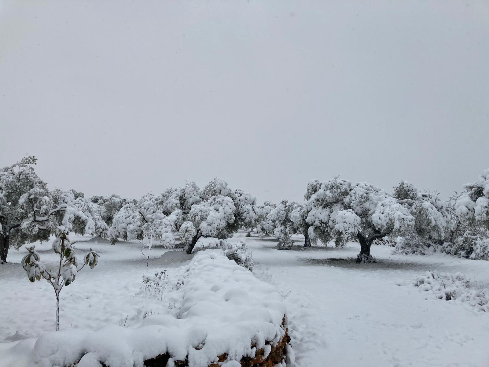 Ingezonden foto's van onze lezers van de sneeuwval in Spanje