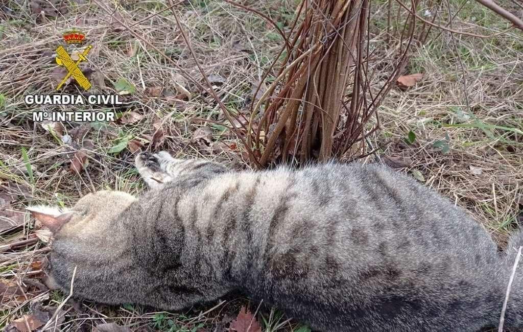 Politie opent jacht op 'matagatos' die katten doodt in Tarragona