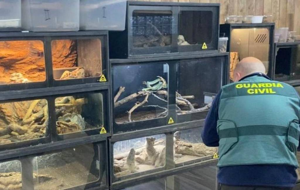 Man meldt zich na slangenbeet maar blijkt zelf in huis 45 slangen en 12 schorpioenen te hebben