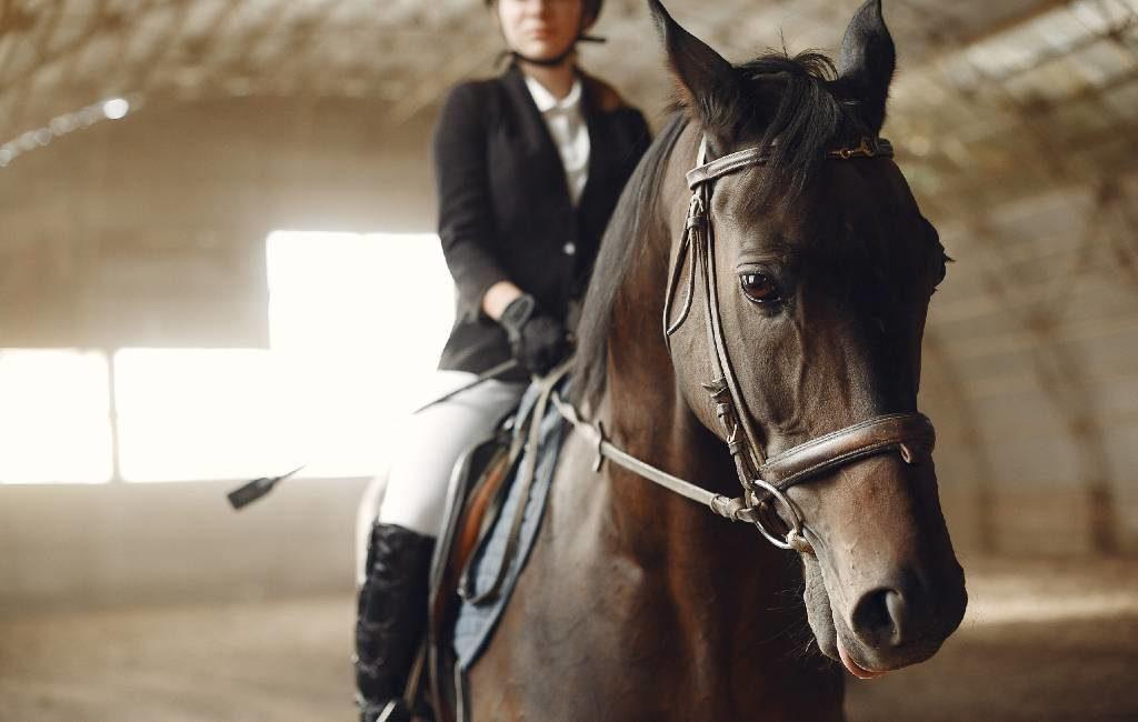Rhinopneumonie-virus onder paarden uitgebroken in Valencia