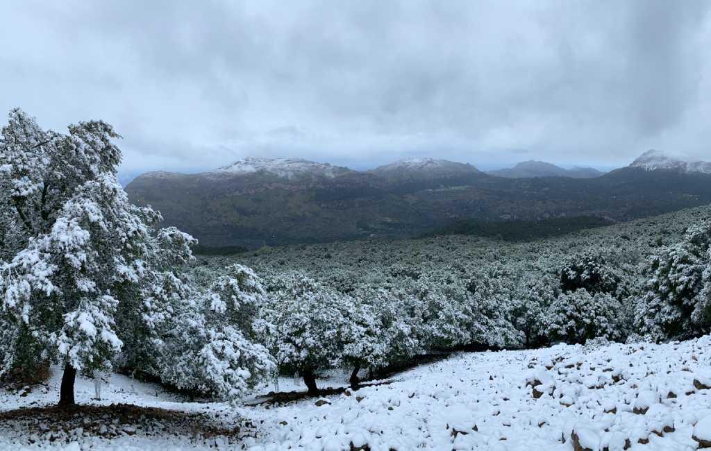 Lente op Mallorca begonnen met opnieuw sneeuwval in Tramuntana gebergte