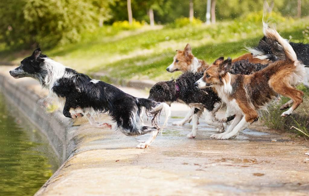 Barcelona installeert 73 hondenuitlaatzones die met tijdsloten te bezoeken zijn
