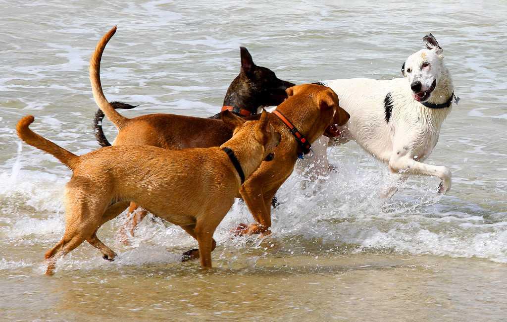 De stad Tarragona krijgt deze zomer eindelijk een langverwacht hondenstrand