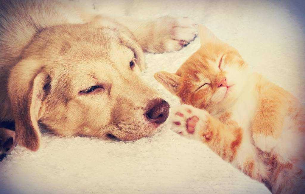 Huisdieren Spanje stapje dichterbij om geen 'dingen' meer te zijn maar 'levende wezens'