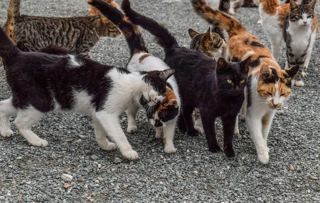 Door katten aangevreten lichaam van 79-jarige vrouw gevonden in Madrid