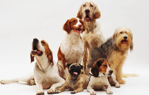 De meest voorkomende en andere hondennamen in Spanje in 2020
