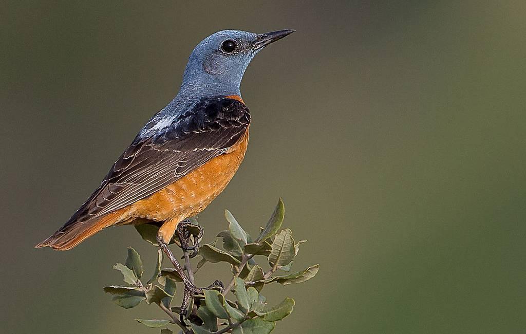 Ongunstige staat van instandhouding veel voorkomende vogelsoorten in Spanje