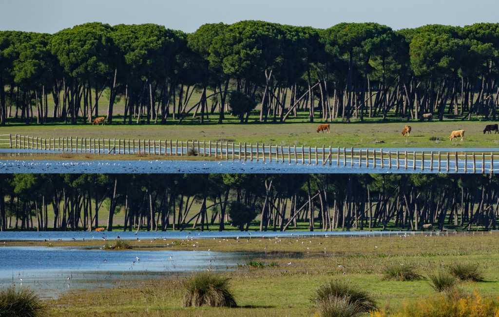 Europese veroordeling van Spanje voor het vernietigen van Doñana-natuurgebied