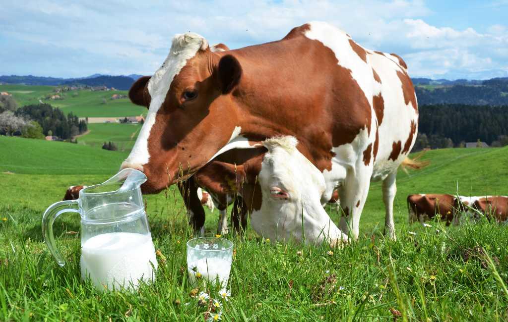 Melkprijs in Spanje is de laagste in heel Europa