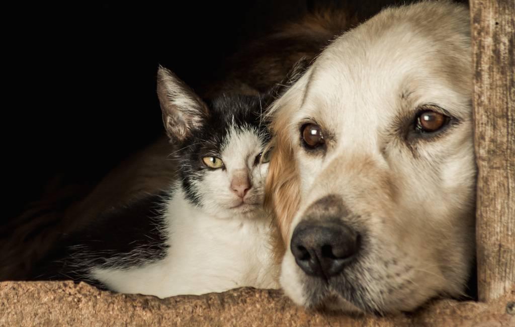 286.000 in de steek gelaten honden en katten in Spanje in 2020