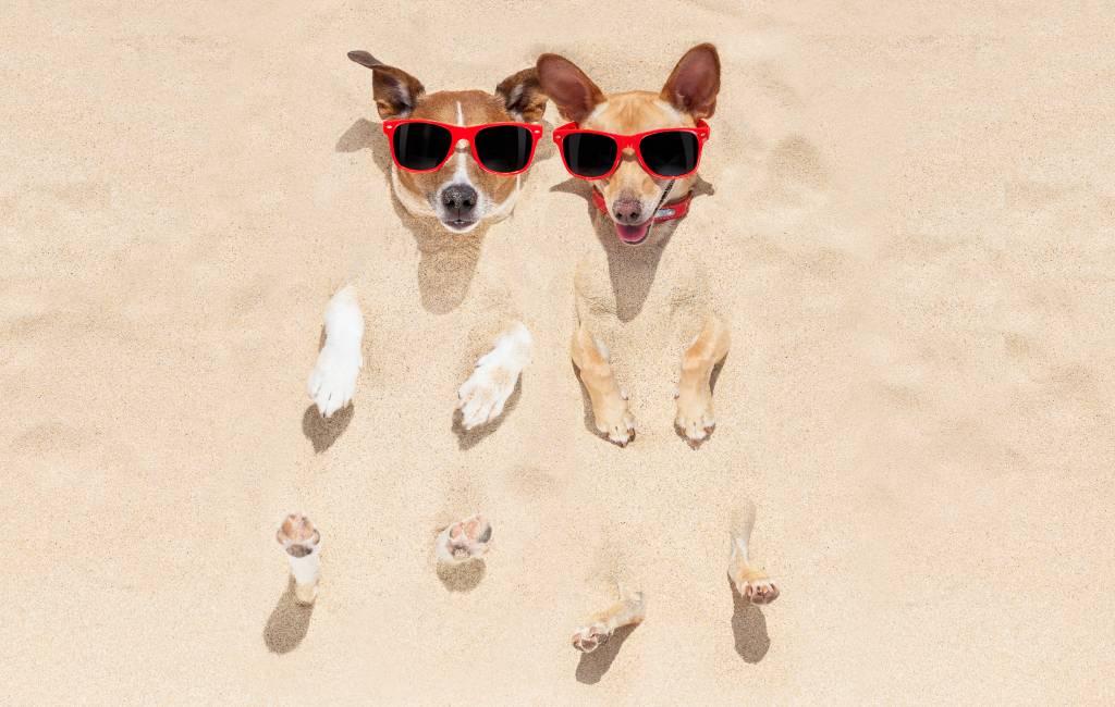 De 'hondsdagen'-periode is gearriveerd in Spanje met temperaturen van 40 graden of meer