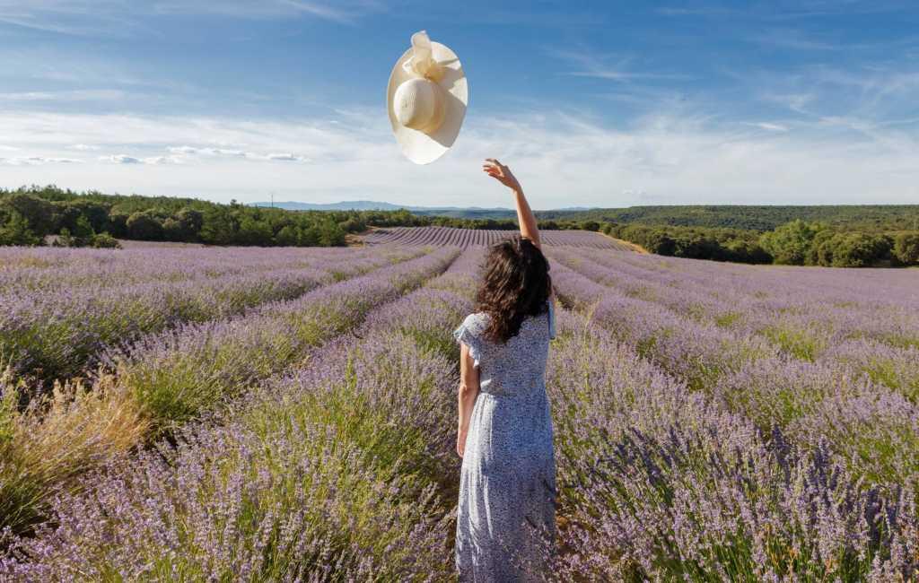 De Spaanse lavendelvelden staan weer volop in bloei