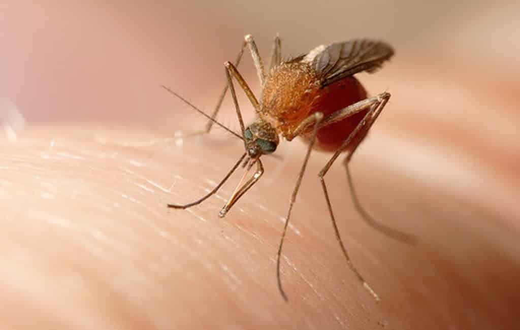 Eerste dode en ziekenhuisopnames na muggenbeet en westnijlvirus bij Sevilla