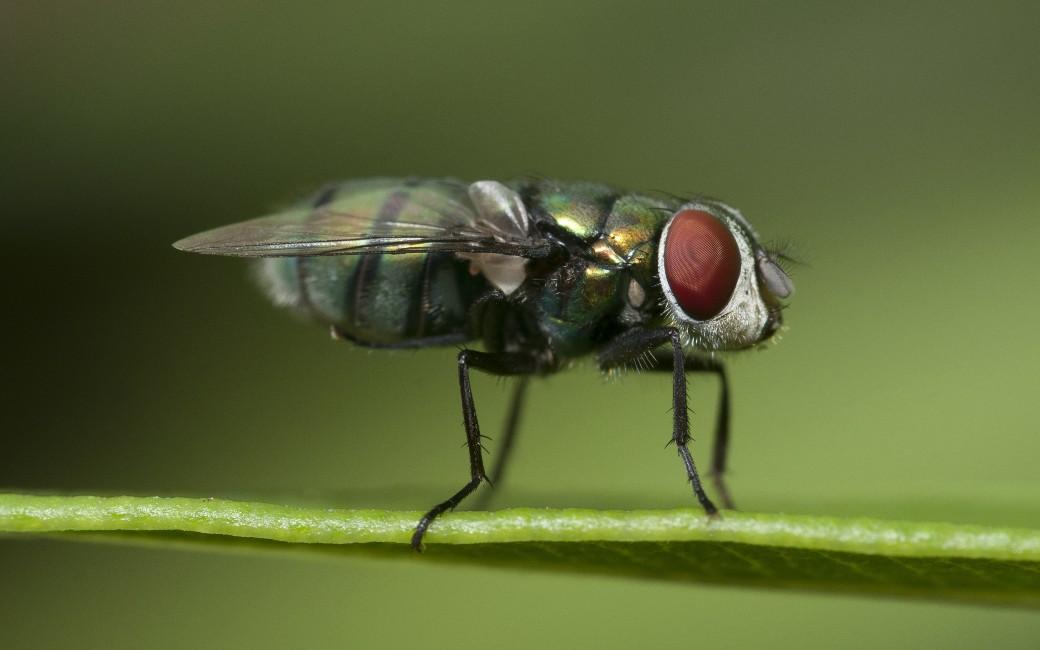 Het geheim van de vervelende vliegen die onze siesta verstoren in Spanje