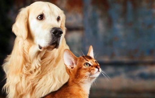 Huisdieren krijgen een identiteitsbewijs in Spanje in 2022
