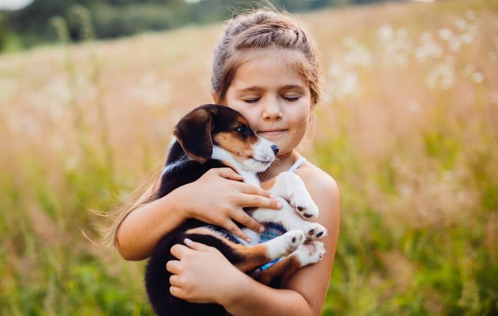 Nieuwe controversiële dierenwelzijnswet in de maak in Spanje