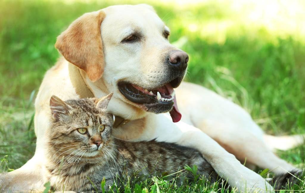 Huisdieren Spanje bijna geen 'dingen' meer maar 'levende wezens met gevoelens'