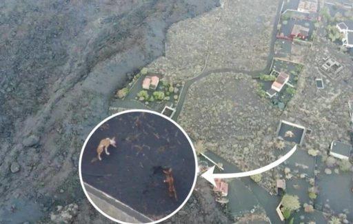 Toestemming om de honden die vastzitten op La Palma met drones te redden