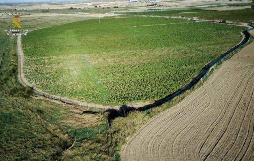 Grootste wietplantage van Europa opgerold in Toledo: 12 hectare met 135.000 planten