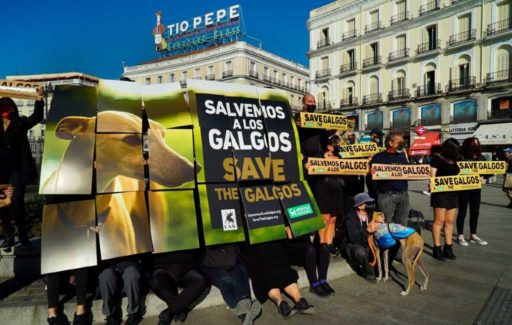 Teken de petitie voor een betere bescherming van de galgo honden in Spanje