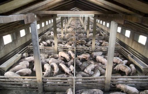 Spaanse binnenland verzet zich tegen mega-varkenskwekerijen