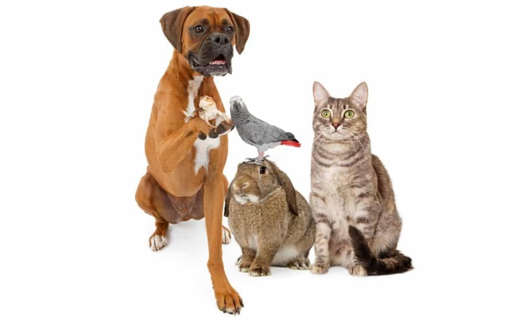 Populairste honden- en katten namen in Spanje