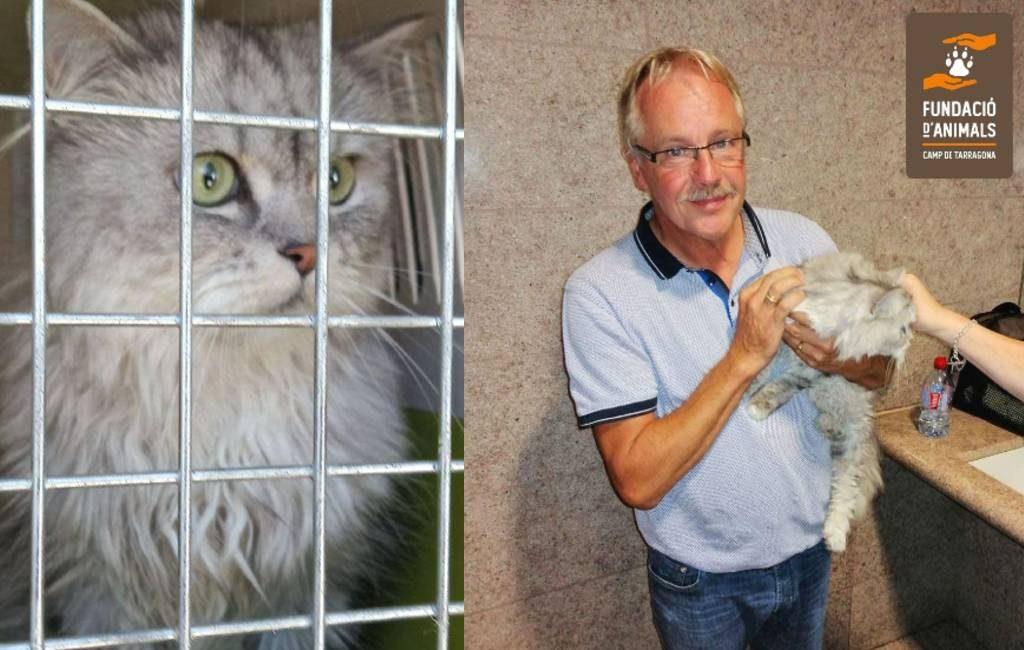 Happy End voor ontsnapte Belgische kat in Tarragona