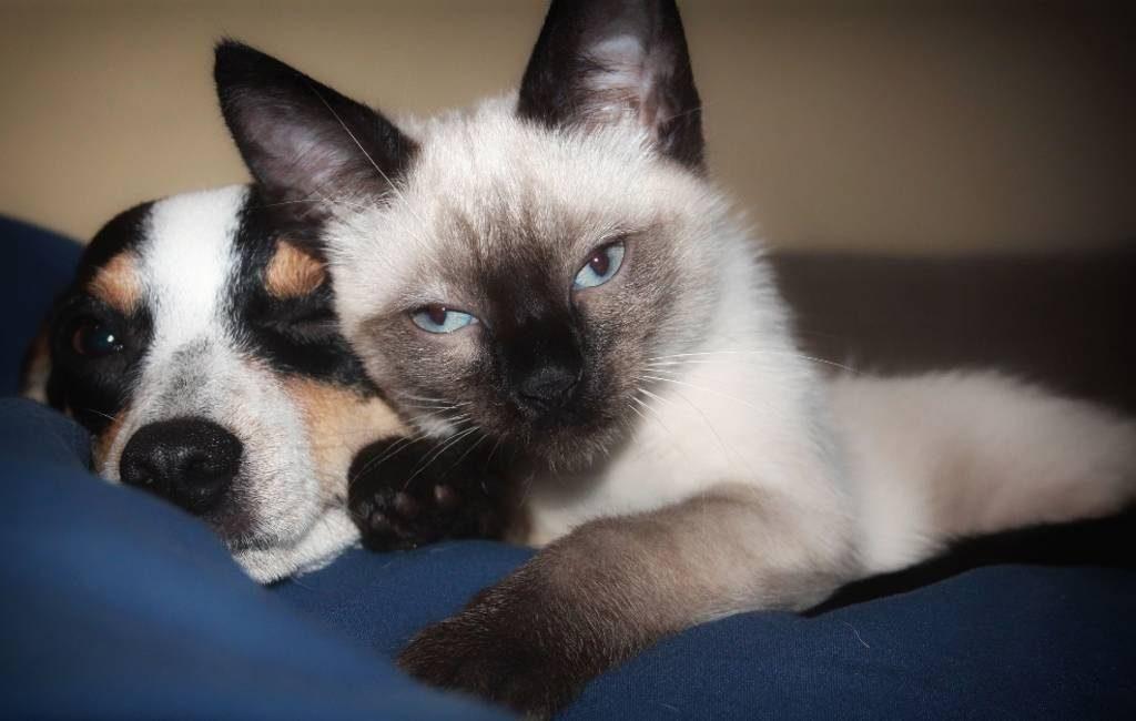 Barcelona beboet advertentiewebsites voor aanbieden dieren