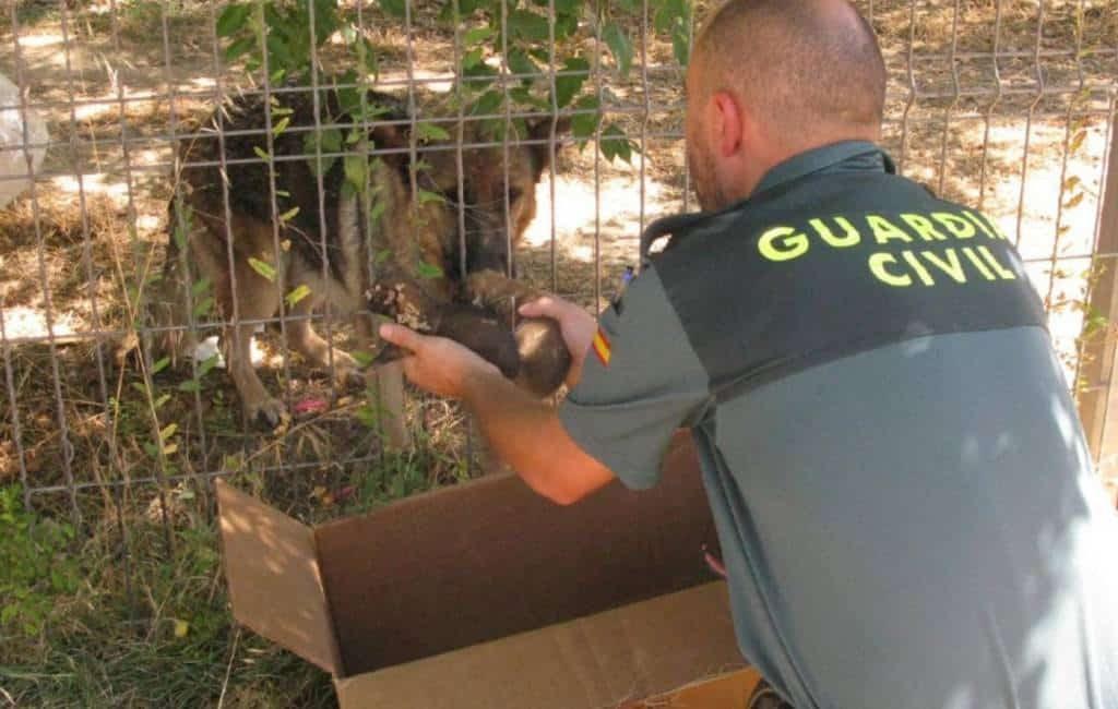 Politie redt levend begraven puppies van moeder herdershond