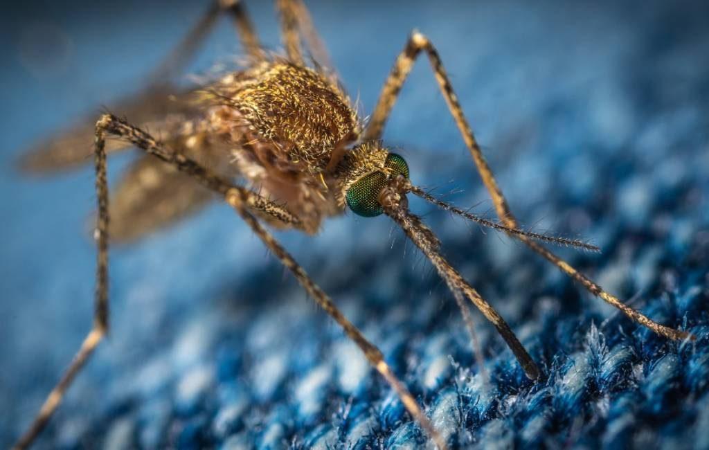 Meer muggen dan normaal in Spanje