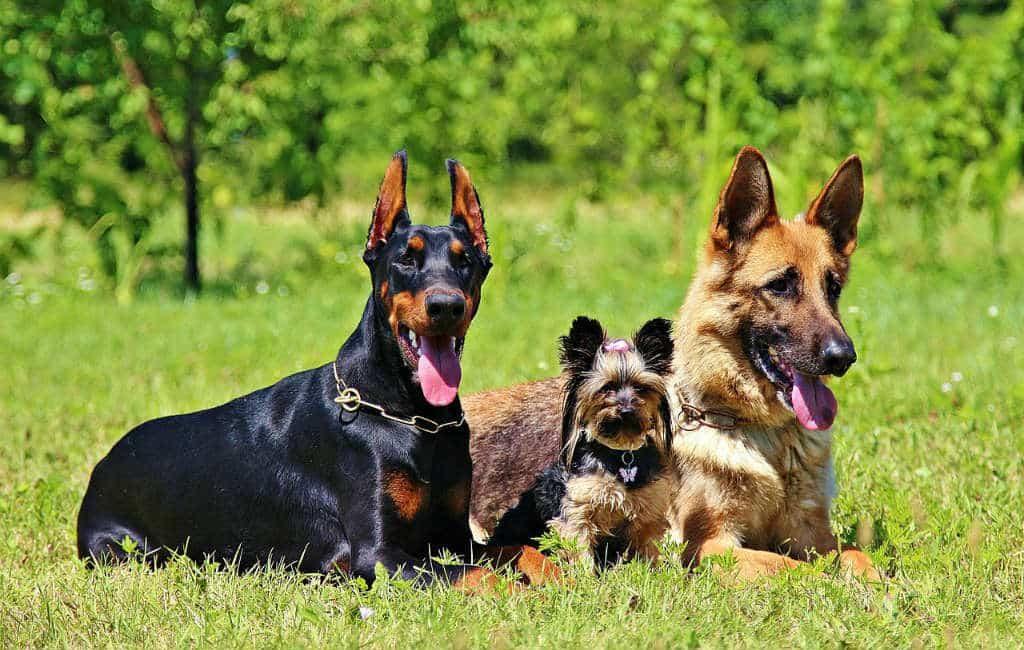 Gerona wil limiet stellen aan aantal honden in huis