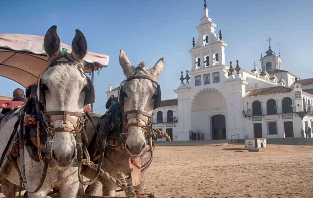 Zeven paarden overleden tijdens de bedevaart naar Rocío in Andalusië