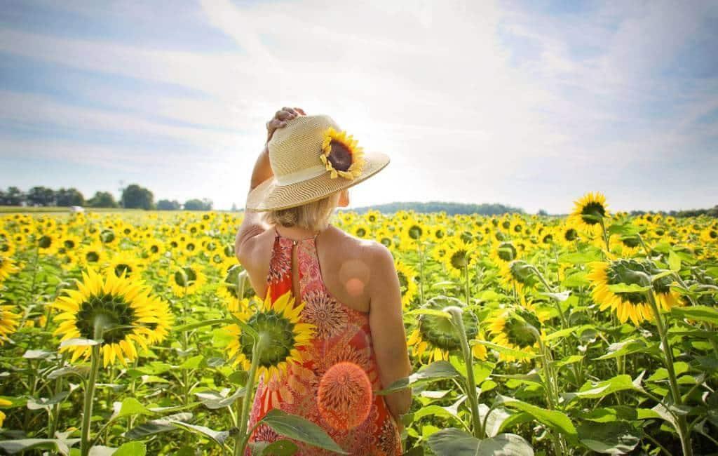 Beste plaatsen om bloeiende zonnebloemen te zien in Spanje