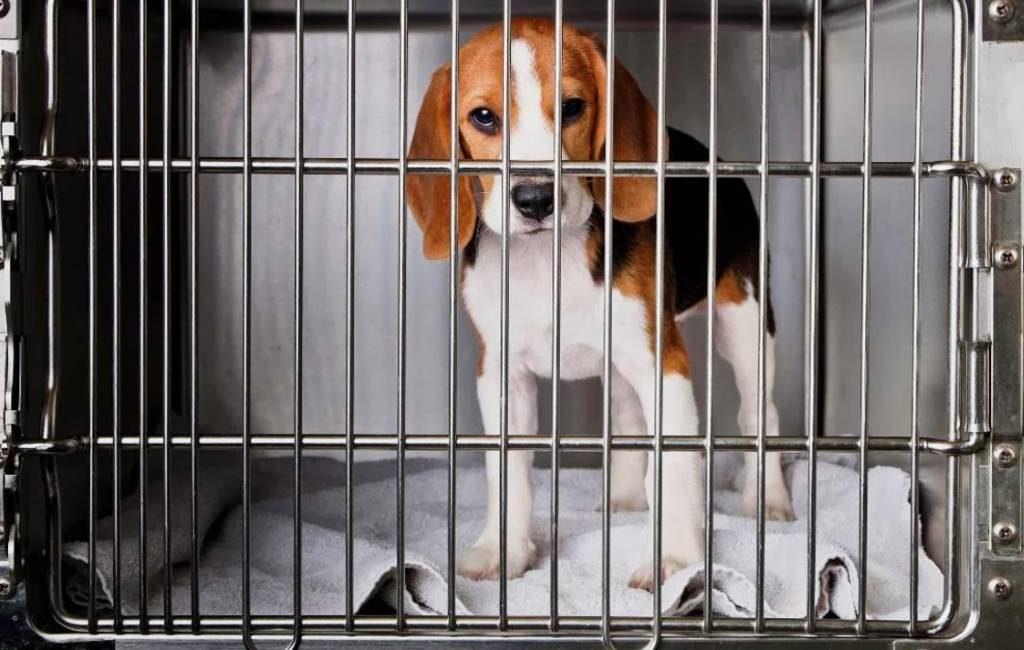 Jaarlijks worden 800.000 dieren gebruikt bij proeven in Spanje