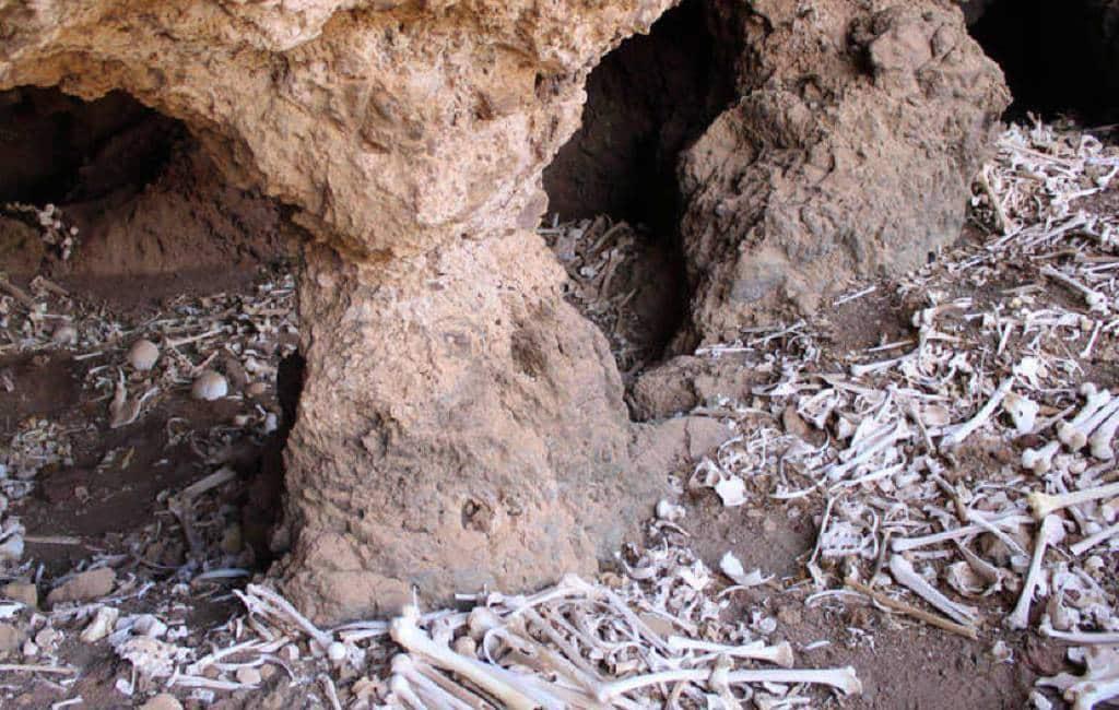 Pre-Spaanse begraafplaats grot met 80 lichamen gevonden op Gran Canaria