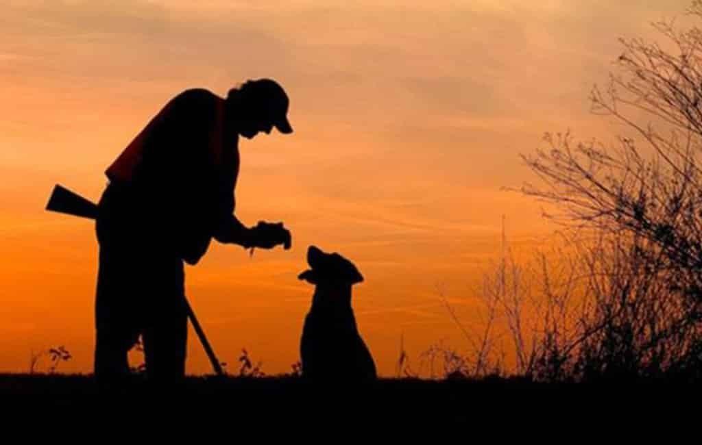 Jager die honden doodde 8 maanden naar de cel in Spanje