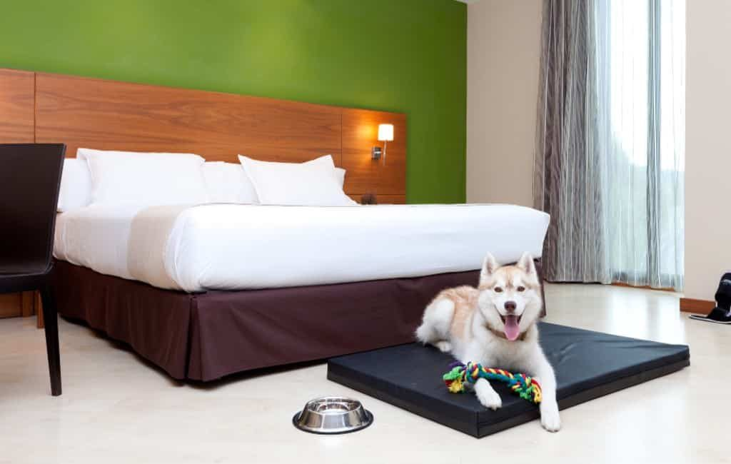 Paradores hotels in Spanje waar men met de hond mag overnachten