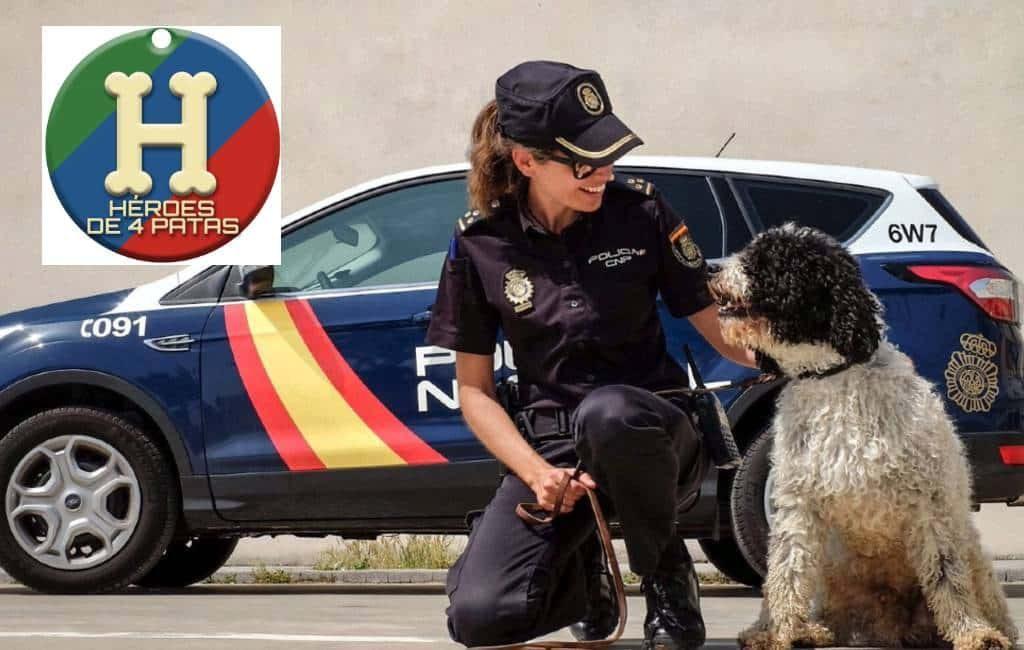Spaanse politiehonden in adoptie via 'Héroes de 4 patas'