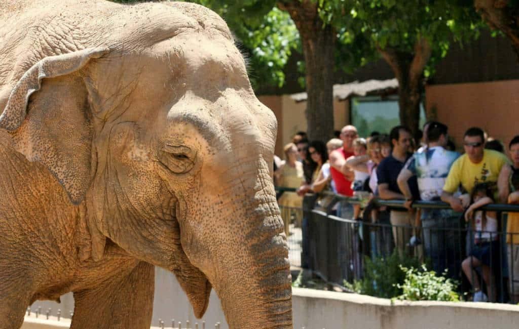45-jarige dierentuin olifant Flavia in Córdoba overleden