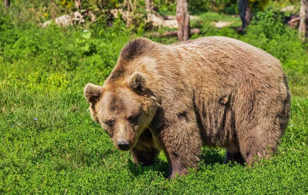 Protest boeren tegen herintroductie beren in de Pyreneeën