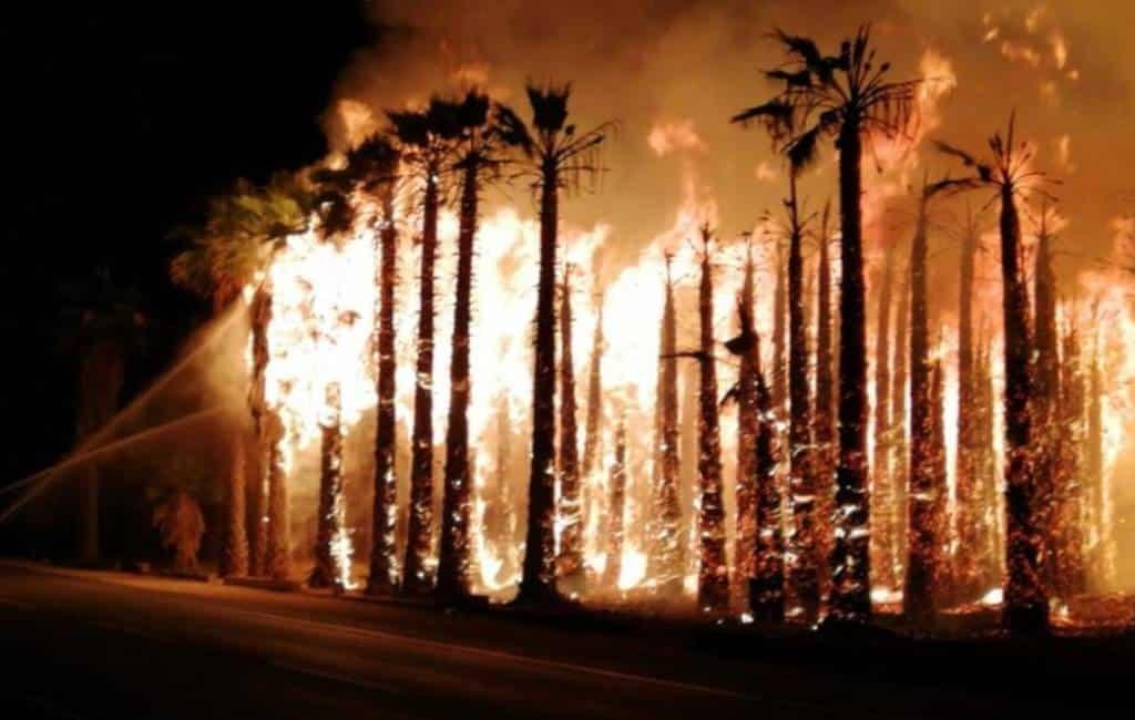 Duizenden palmbomen verbrand in 'palmen' stad Elche