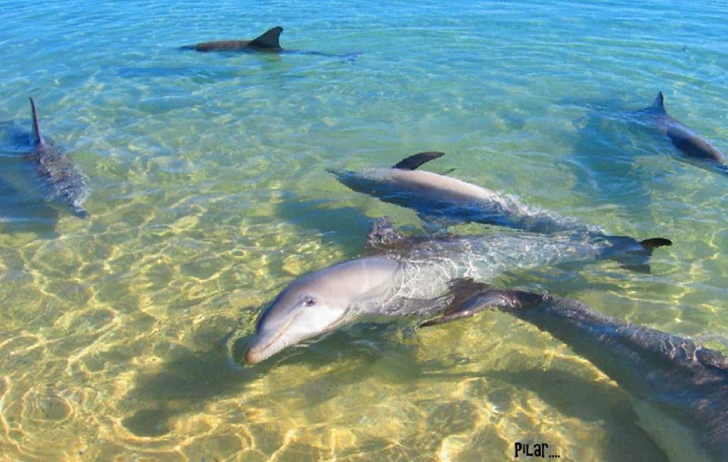 14 dode dolfijnen aangespoeld op strand in Cantabrië